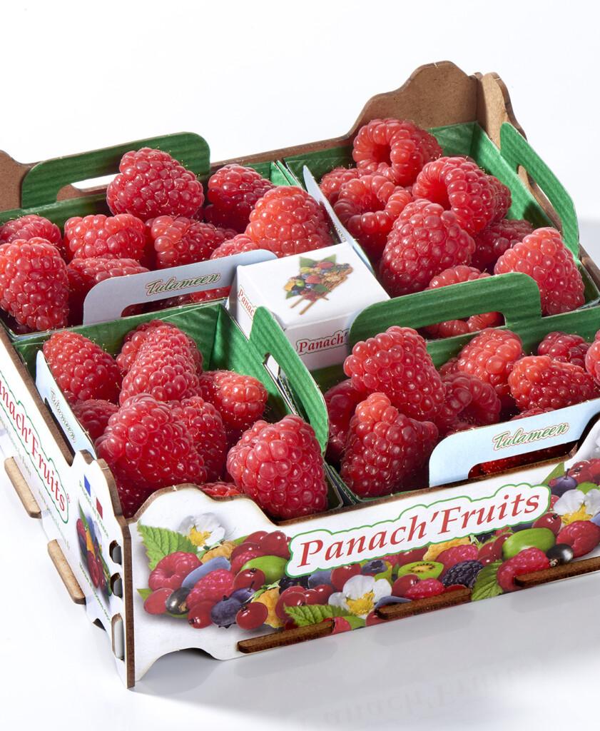 PLATEAU Panach' fruits